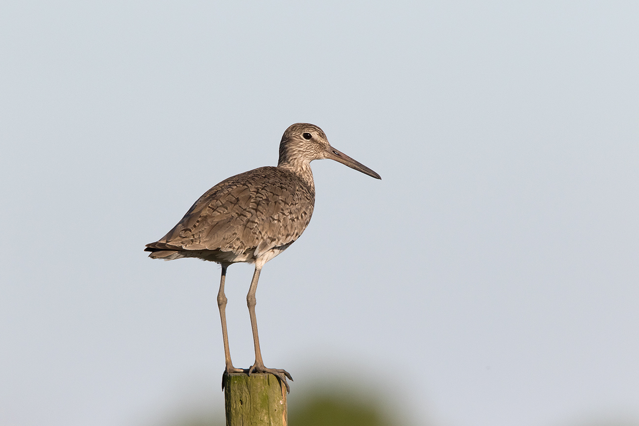 WILLET - GALVESTON COUNTY TX APRIL, 2016