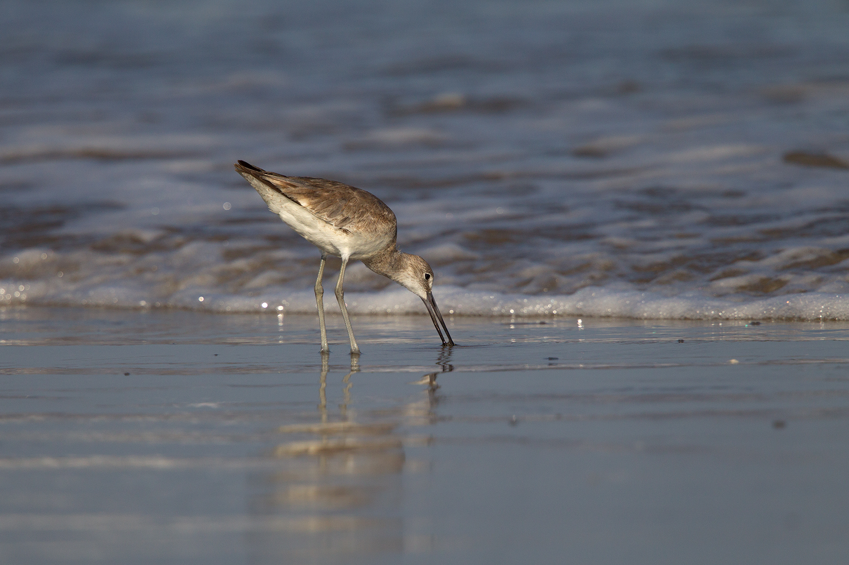 WILLET - GALVESTON COUNTY TX MAY, 2016