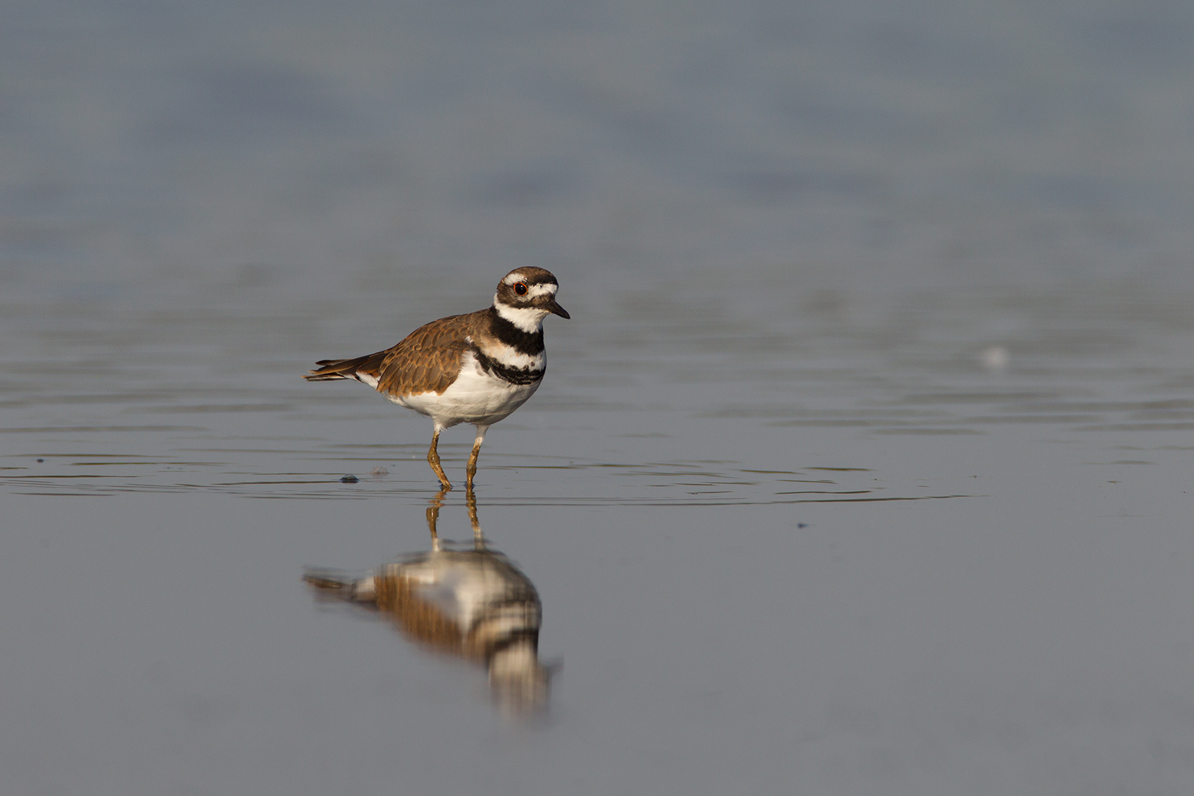 KILLDEER - GRAYSON COUNTY TX
