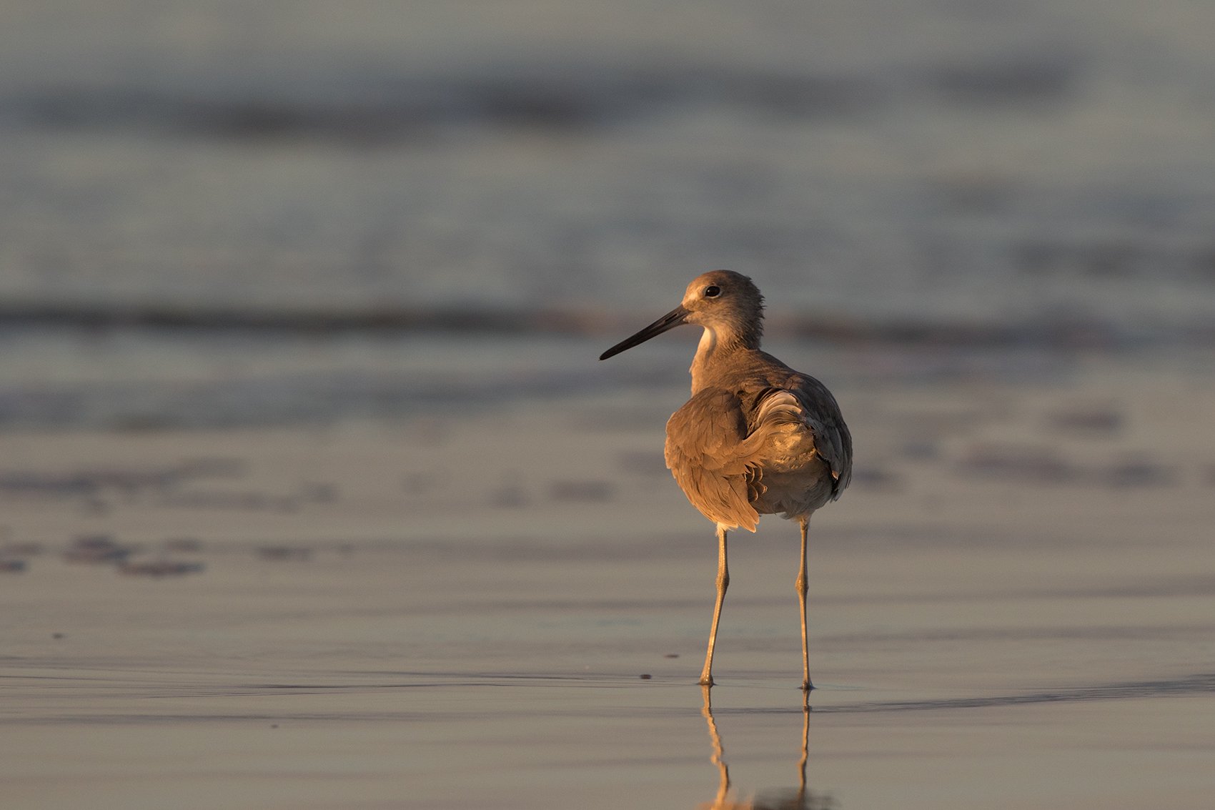WILLET - GALVESTON COUNTY TX NOV. 2016