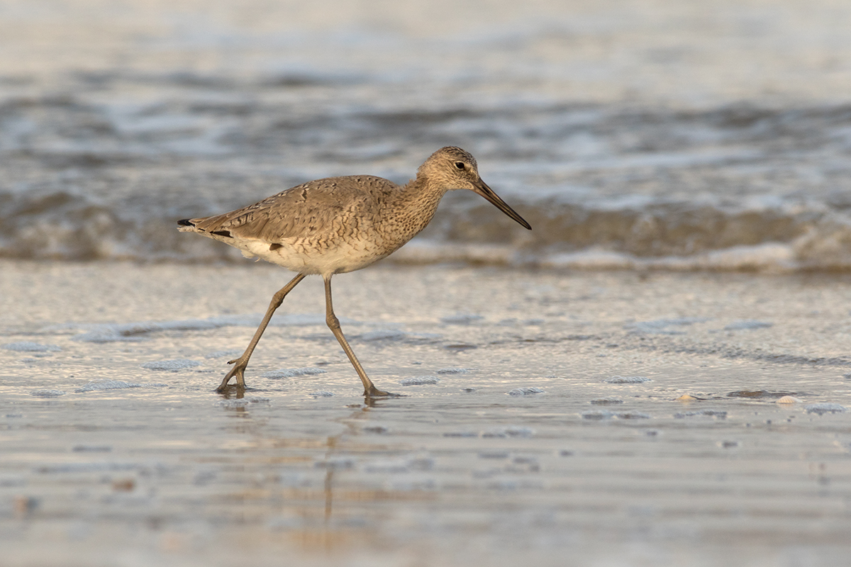WILLET - GALVESTON COUNTY TX APRIL, 2017