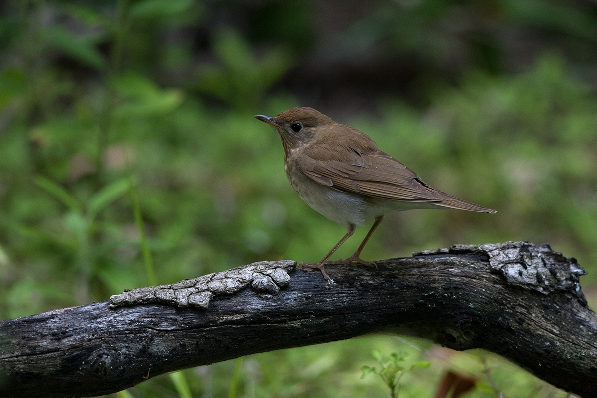 VEERY - GALVESTON COUNTY TX APRIL, 2017