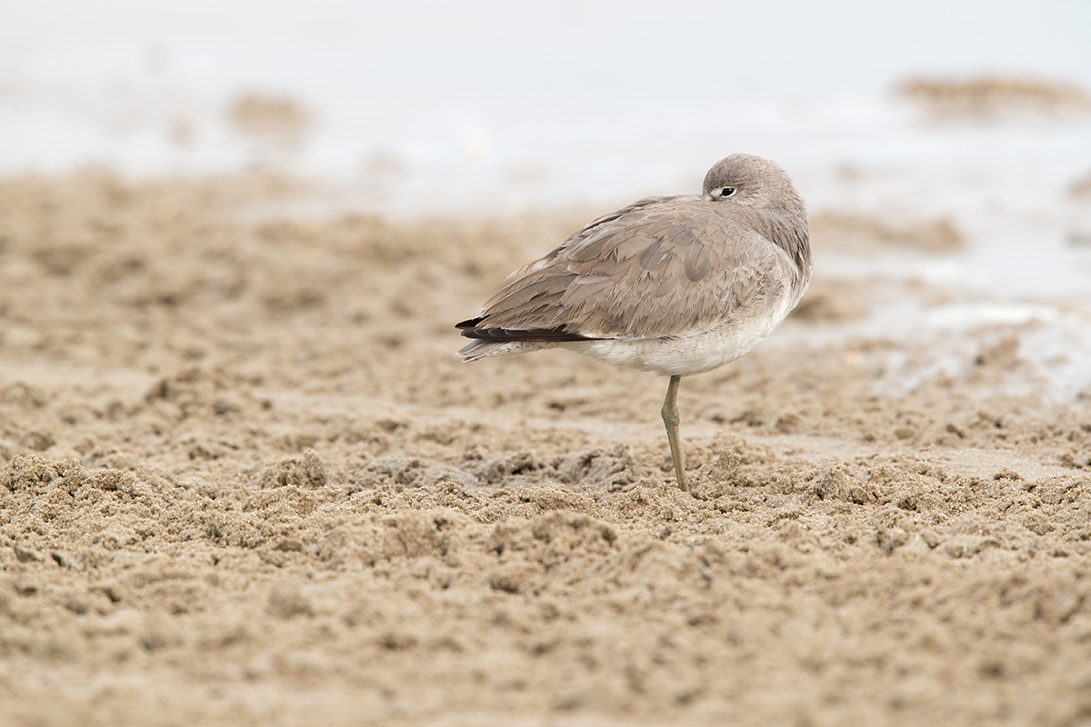 WILLET - GALVESTON COUNTY TX DEC, 2017