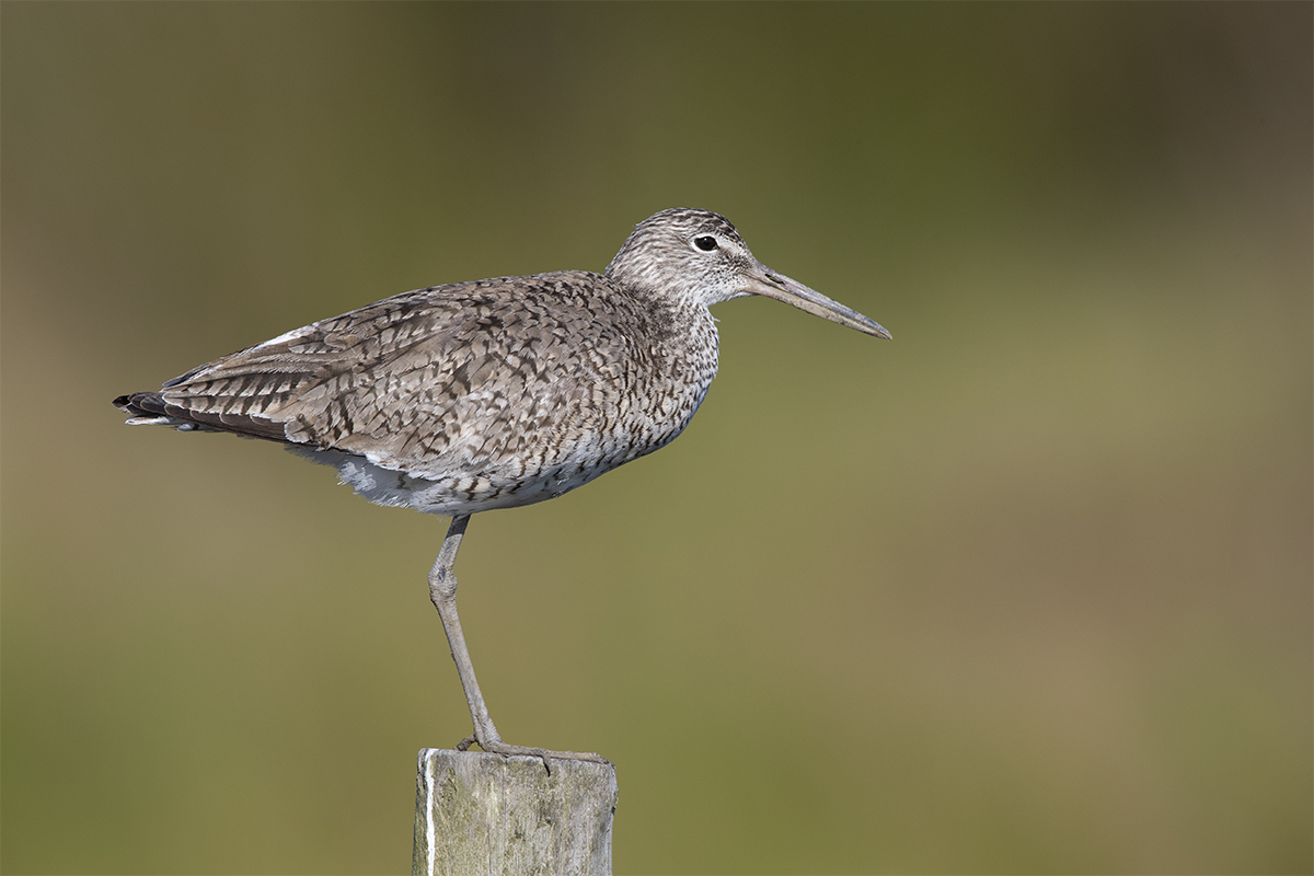 WILLET - GALVESTON COUNTY TX APRIL, 2018