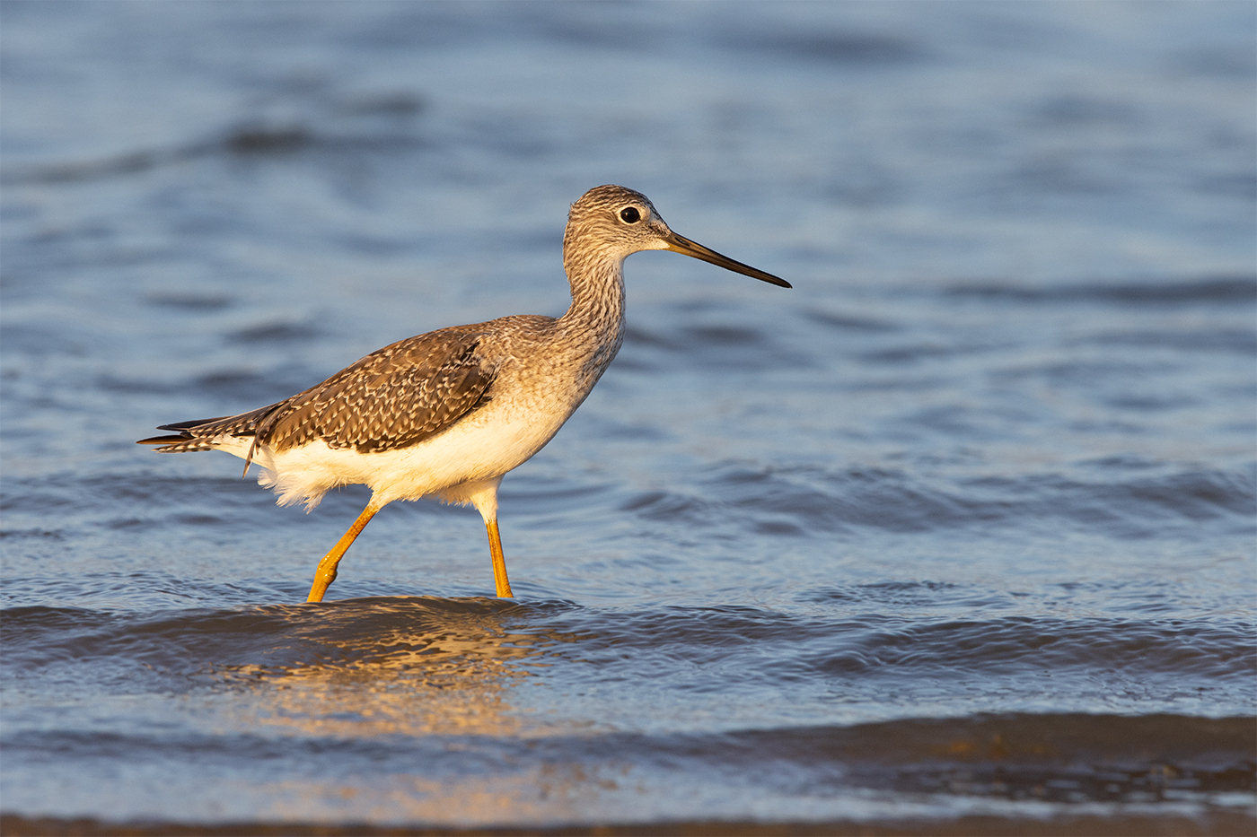 GREATER YELLOWLEGS - TAYLOR COUNTY TX OCTOBER, 2019