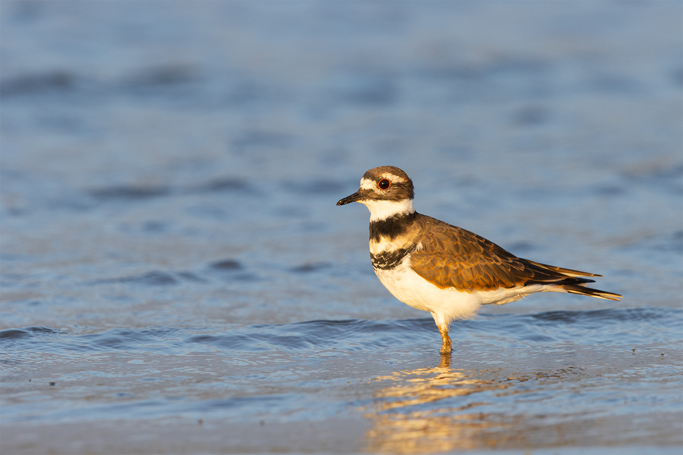 KILLDEER - TAYLOR COUNTY TX OCTOBER, 2019